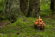 S�jour Cueillette des Champignons au Haut Jardin