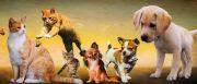 Salon Animalier de la Seconde Chance à Saint-Dié