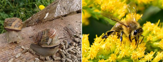 Agriculteurs du 54 Escargots et Miel en Lorraine