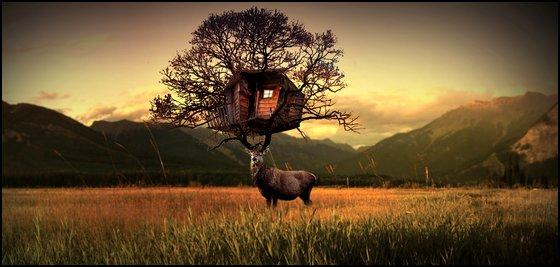 Fenêtres Ouvertes Nids des Vosges