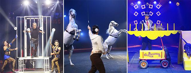 Tournée Cirque Arlette Gruss les Bêtes de Cirque Nancy Lorraine