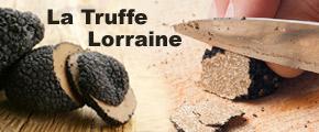 Truffes en Lorraine