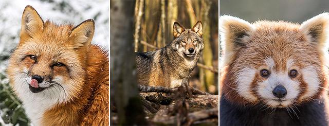 Parc Animalier de Sainte-Croix Ouverture Hivernale 2020