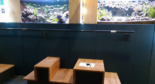 Réouverture Museum Aquarium Nancy MAN aquarium accessible aux petits