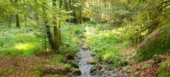 Haut Jardin Vosges