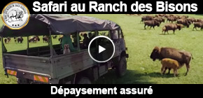 ranch bisons