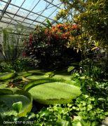 Parcours Serres Tropicales Jardin Botanique Montet 54600 Villers-lès-Nancy du 04-12-2015 à 12:00 au 04-01-2016 à 15:00