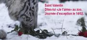 Saint Valentin Sauvage au Zoo d'Amnéville 57360 Amnéville du 14-02-2017 à 14:00 au 14-02-2017 à 21:00