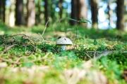 Sortie Mycologique à Badonviller  54540 Badonviller du 21-10-2017 à 14:30 au 21-10-2017 à 17:30