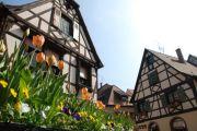 Le Printemps d'Alsace à Obernai 67210 Obernai  du 18-03-2018 à 08:30 au 06-05-2018 à 18:30