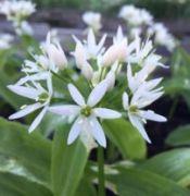 Découverte de la Flore Printanière à Maron  54230 Maron du 19-05-2018 à 09:30 au 19-05-2018 à 12:00