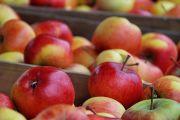 Fête de la Pomme au Moulin d'Eschviller Volmunster 57720 Volmunster du 14-10-2018 à 10:00 au 14-10-2018 à 19:00