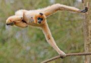 Ouverture du Parc Animalier de Sainte-Croix à Rhodes