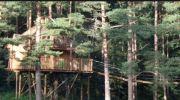 Nids des Vosges Cabanes de Luxe 88640 Champdray du 20-01-2020 à 16:00 au 31-12-2020 à 23:59