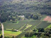 Salon des Vignerons à Corny-sur-Moselle 57680 Corny-sur-Moselle du 22-02-2020 à 09:00 au 23-02-2020 à 18:00