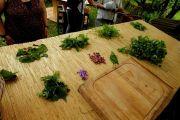Balades Découverte des Plantes Comestibles à Moussey 88210 Moussey du 01-06-2020 à 14:00 au 26-07-2020 à 16:30