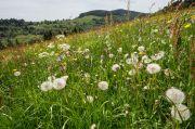 Balades Reconnaissance des Plantes Comestibles à Sapois 88120 Sapois du 20-06-2020 à 14:30 au 04-08-2020 à 12:00
