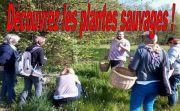 Découverte Plantes Sauvages à Dounoux 88220 Dounoux du 10-08-2020 à 10:00 au 10-08-2020 à 17:00