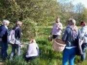 Découverte Plantes Sauvages à Dounoux