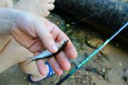 Découverte et Initiation Pêche à la Vôge-les-Bains