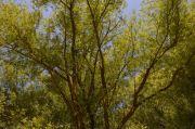 Sortie Nature à Sarreguemines Énergie des Arbres 57200 Sarreguemines du 27-06-2021 à 14:00 au 27-06-2021 à 17:00