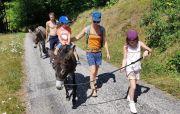 Randonnées avec des Ânes La Bresse Gérardmer 88400 Gérardmer du 04-05-2021 à 10:00 au 30-06-2021 à 20:00