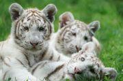 Zoo d'Amnéville saison 2021 57360 Amnéville du 19-05-2021 à 09:30 au 31-12-2021 à 16:30