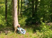 Sylvothérapie dans les Vosges avec Albane
