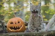Halloween au Parc de Sainte-Croix à Rhodes