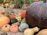 Halloween aux Jardins Fruitiers de Laquenexy