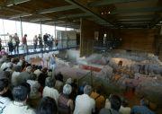 2500 ans d'histoire à Bliesbruck-Reinheim 57200 Bliesbruck du 01-06-2013 à 08:00 au 15-11-2013 à 16:00